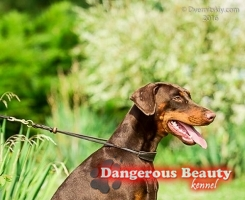 Salomea Dangerous Beauty